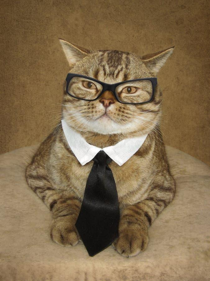 在玻璃的一只猫 免版税库存照片
