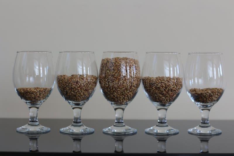 在玻璃的大麦 免版税库存图片