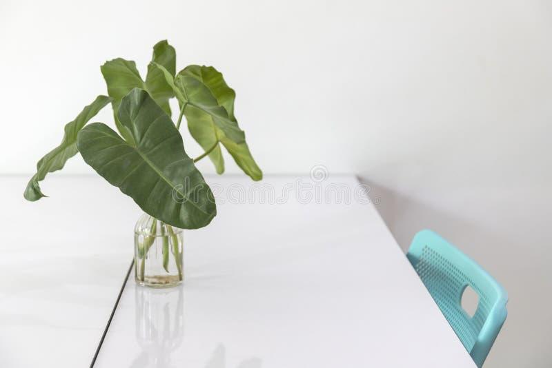 在玻璃花瓶的叶子在白色桌和绿色椅子上 免版税库存图片