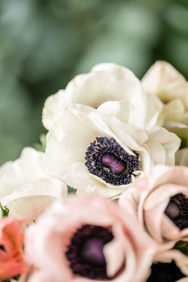 在玻璃花瓶的桃红色和白色银莲花属 束淡色 一个卖花人的概念花店的 墙纸 免版税库存图片