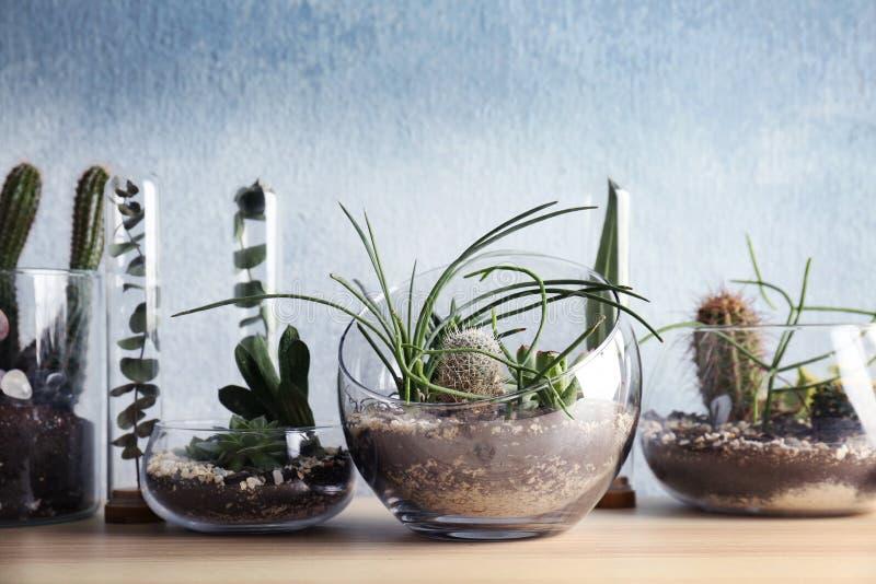 在玻璃花瓶的Florarium有多汁植物的 免版税库存照片