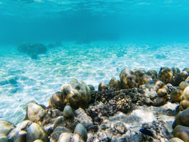 在珊瑚礁的水下的海洋生物 库存图片