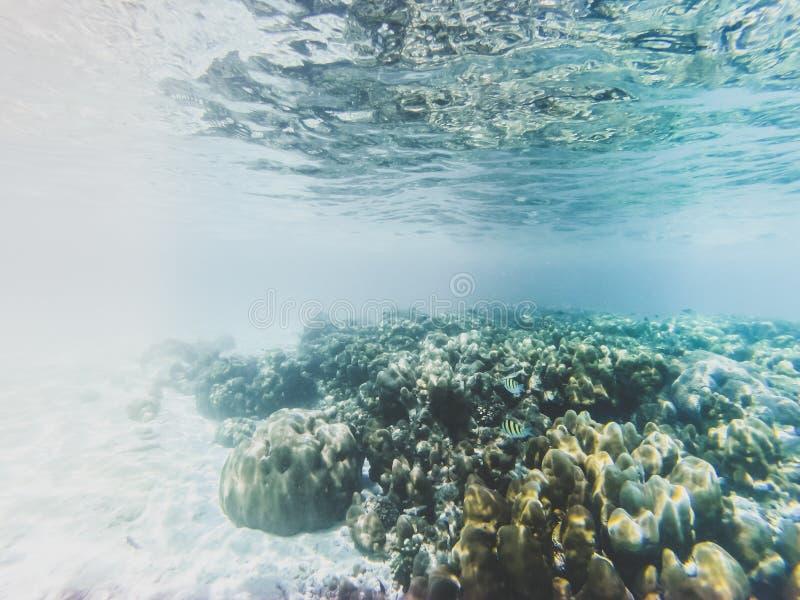 在珊瑚礁的水下的海洋生物 皇族释放例证