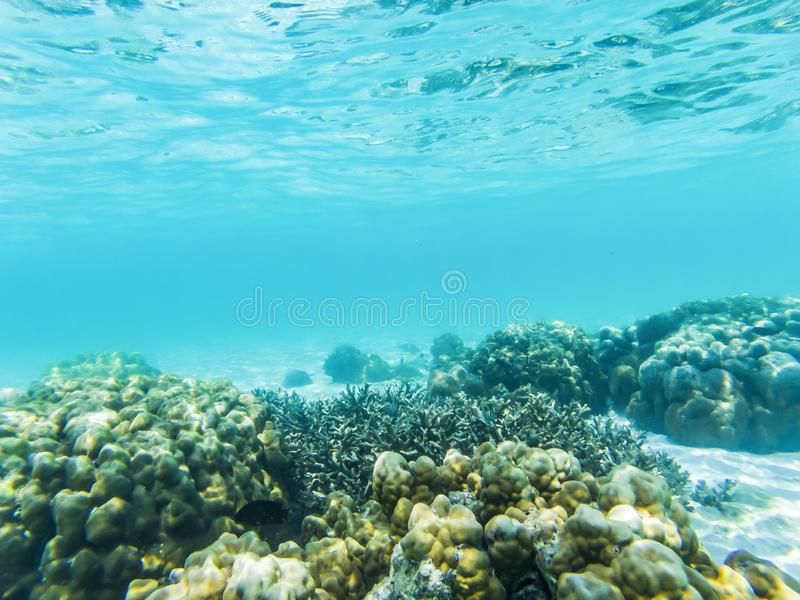 在珊瑚礁的水下的海洋生物 向量例证