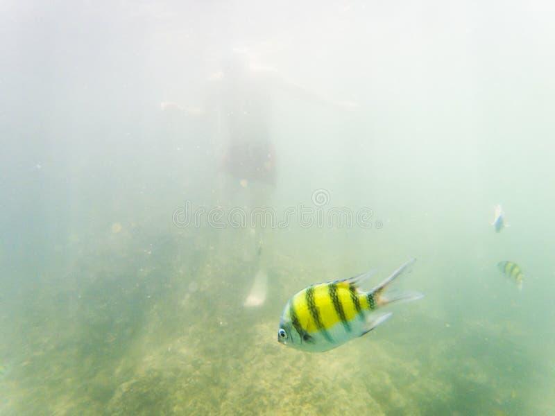 在珊瑚礁的水下的海洋生物 库存例证