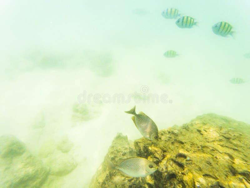 在珊瑚礁的水下的海洋生物 免版税库存图片