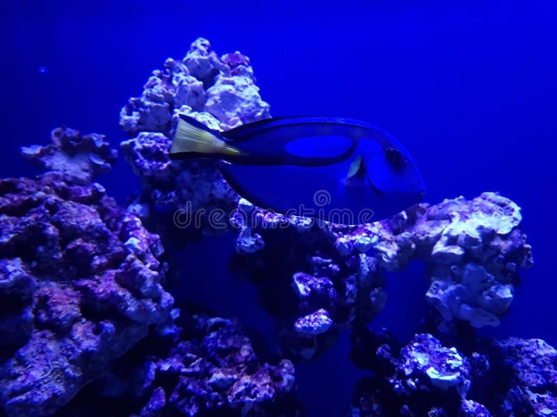 在珊瑚礁的海洋生物 库存图片