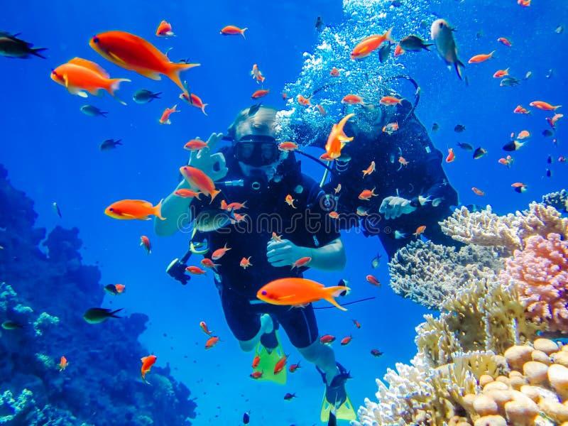 在珊瑚礁的活跃休息潜水 免版税库存图片