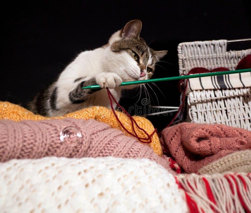 在球之间的一只猫 免版税库存图片