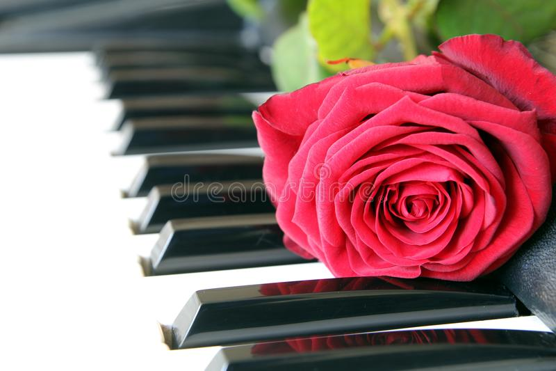 在琴键的红色玫瑰 情人节概念,浪漫音乐 免版税库存图片