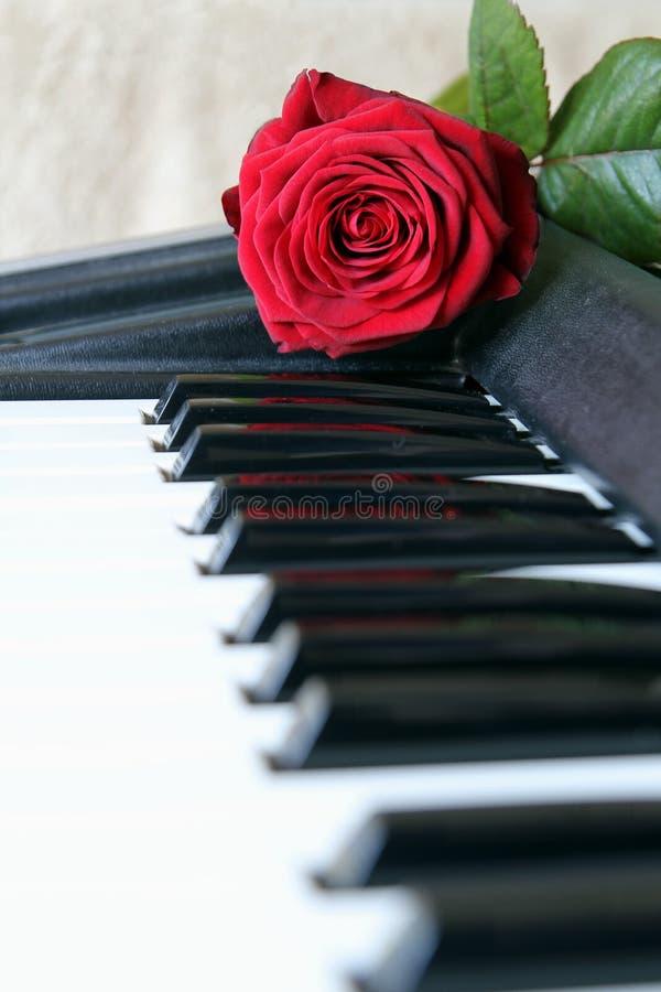 在琴键的红色玫瑰 情人节概念,浪漫音乐 免版税库存照片