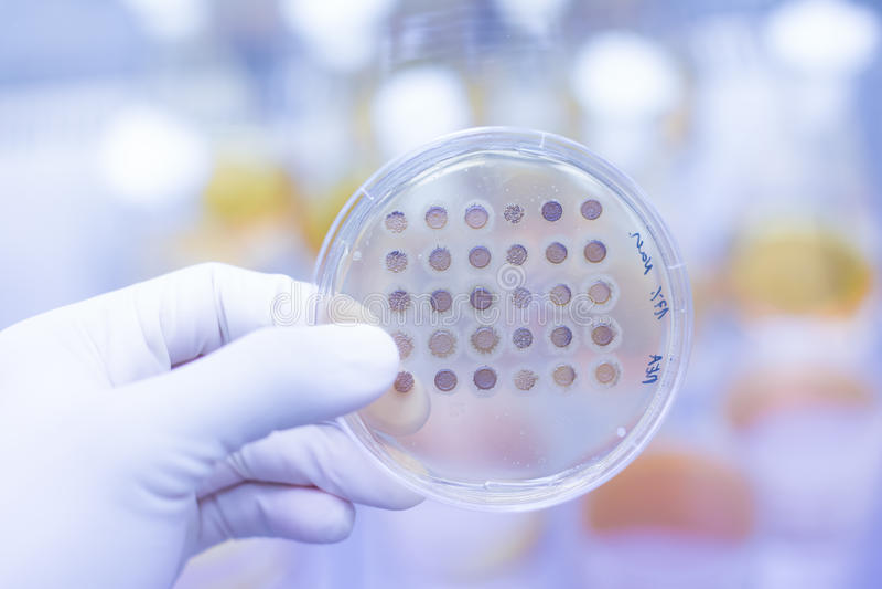 在琼指平板增长的真菌 免版税图库摄影