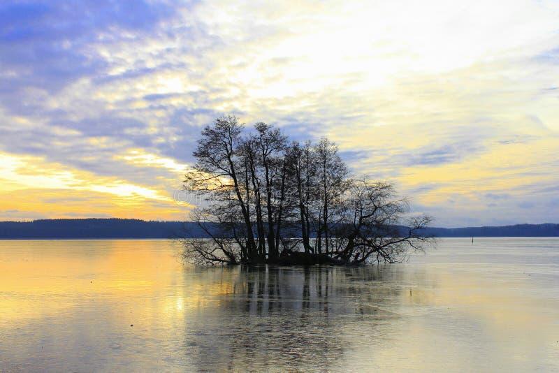 在瑞典湖的33/5000 Odinokoye derevo na Shvedskom ozere偏僻的树 免版税库存照片