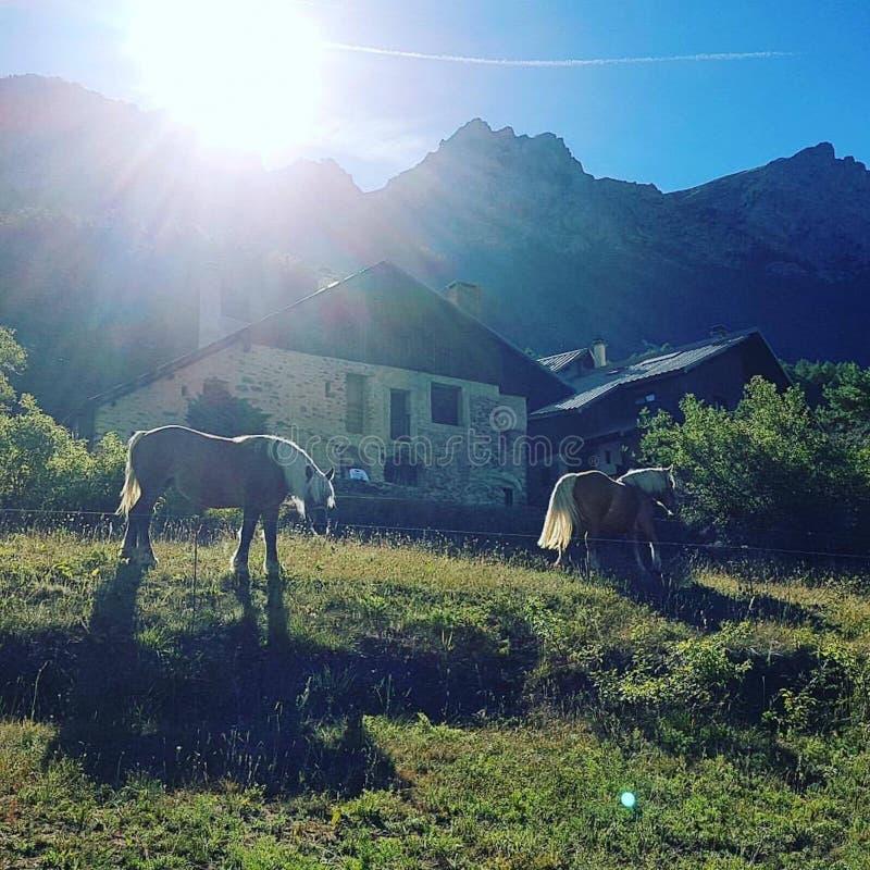 在瑞士山中的牧人小屋的野马 免版税库存图片