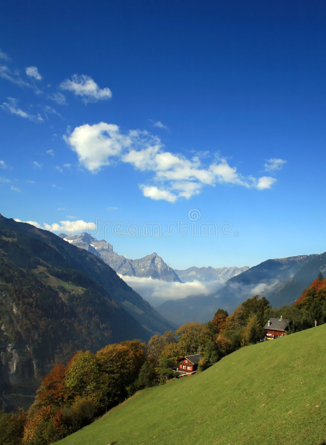 在瑞士视图附近的高山榆木 免版税库存照片