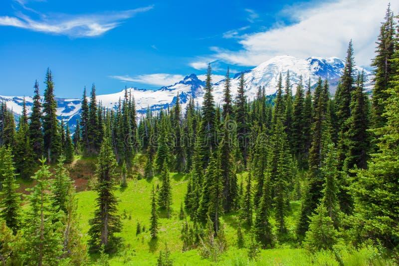 在瑞尼尔山国家公园的夏天高涨有Mt看法  更加多雨 库存照片