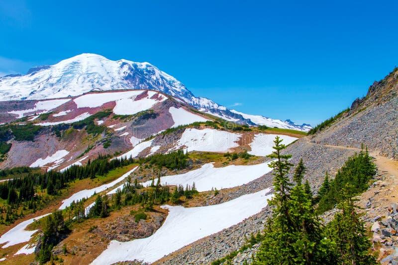 在瑞尼尔山国家公园的夏天高涨有Mt看法  更加多雨 免版税库存图片