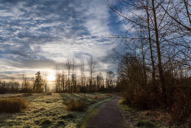 在瑟马米什河足迹的凉快的冬天早晨日出与落叶树剪影在雷德蒙德华盛顿 免版税库存照片