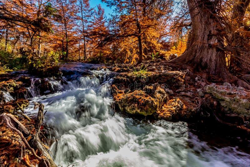在瓜达卢佩河,得克萨斯的美丽的秋叶 免版税库存图片