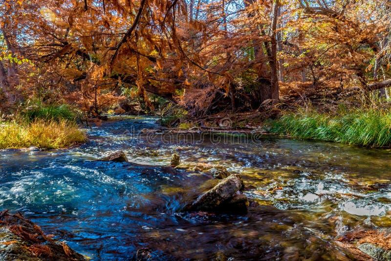在瓜达卢佩河,得克萨斯的美丽的秋叶 图库摄影