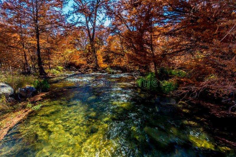 在瓜达卢佩河,得克萨斯的美丽的秋叶 库存图片