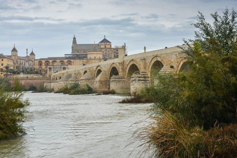 在瓜达尔基维尔河的罗马桥梁和豆科灌木在科多巴 库存照片