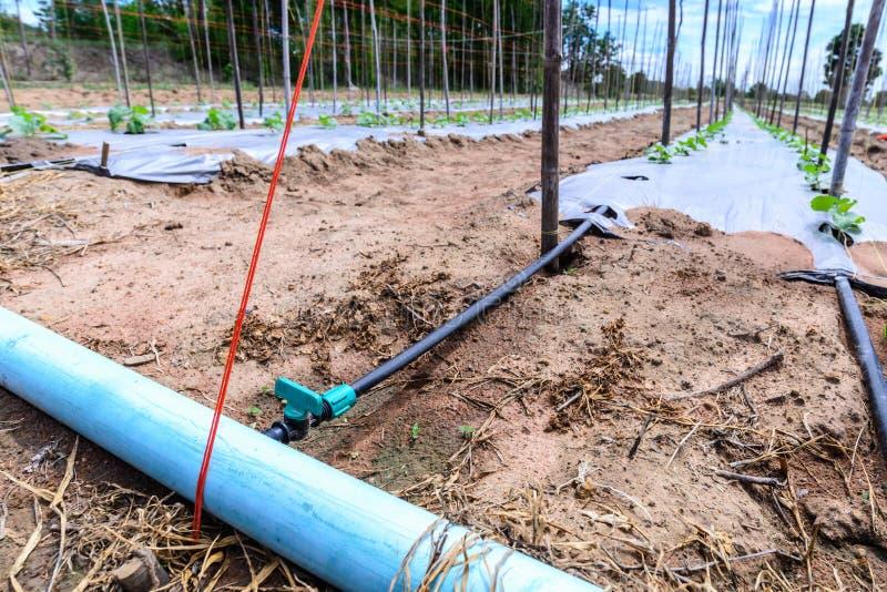 Download 水在瓜领域的灌溉系统 库存图片. 图片 包括有 叶子, 绳索, 绿色, 增长, 农业, 波儿地克的, 腐土 - 59109287