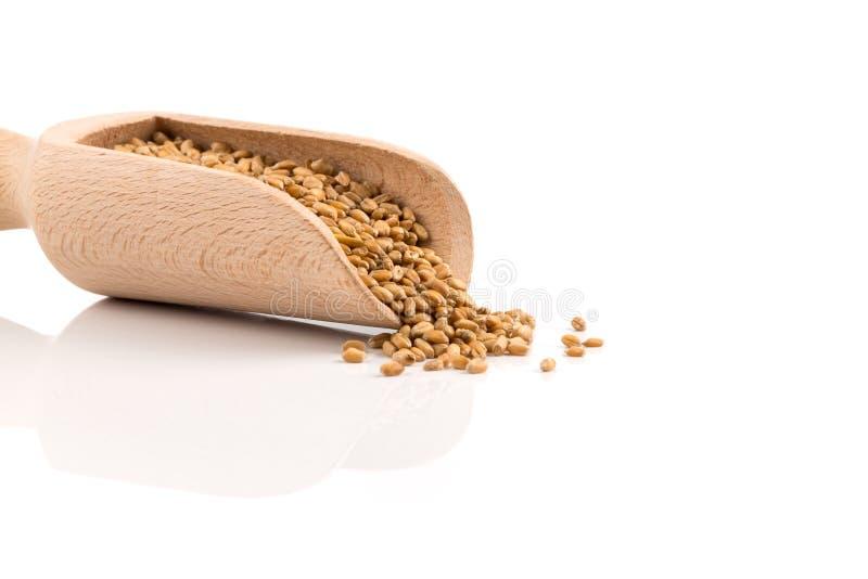 在瓢的麦子五谷 免版税库存照片