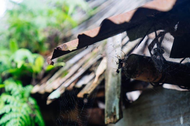 在瓦下的Itsy Bitsy蜘蛛 免版税库存图片