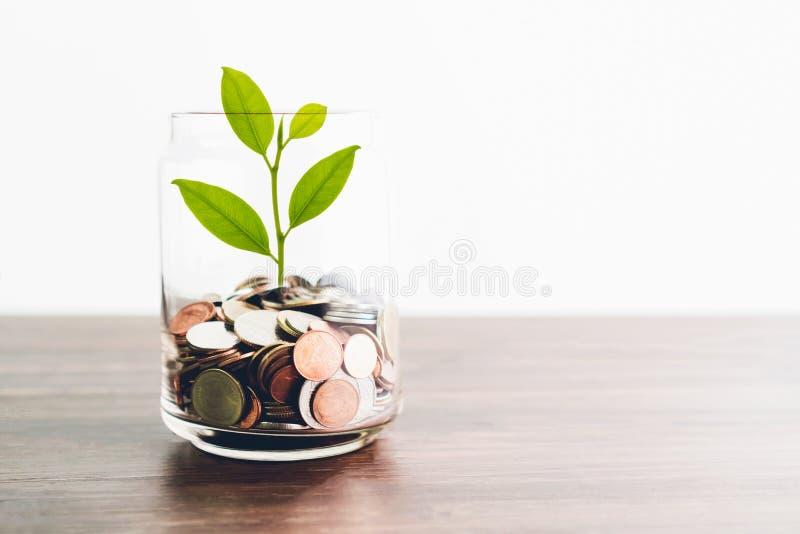 在瓶和绿色树的硬币,代表财政成长 越多金钱您存 库存照片