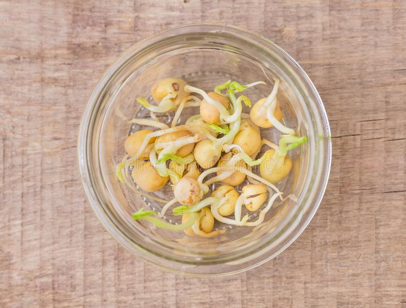 在瓶子的发芽的绿豆 免版税库存照片