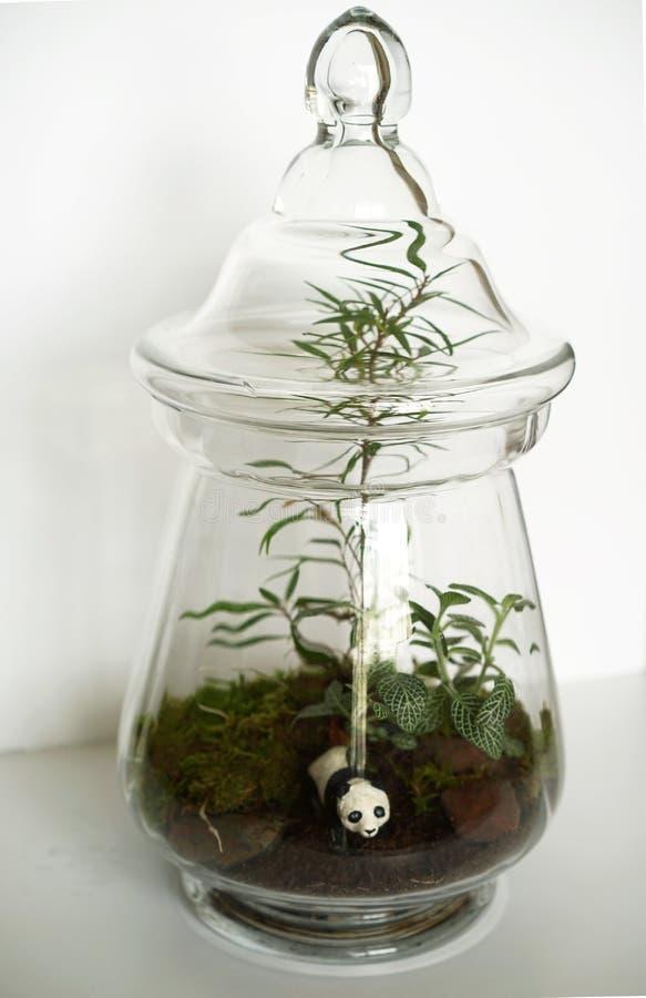 在瓶子的生态系 库存照片