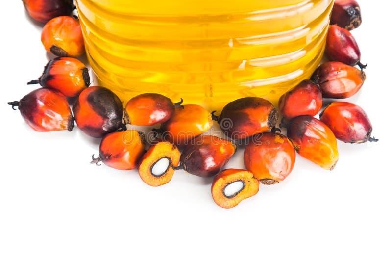 在瓶的被提炼的棕榈油有新鲜的油棕榈树的结果实 免版税库存图片