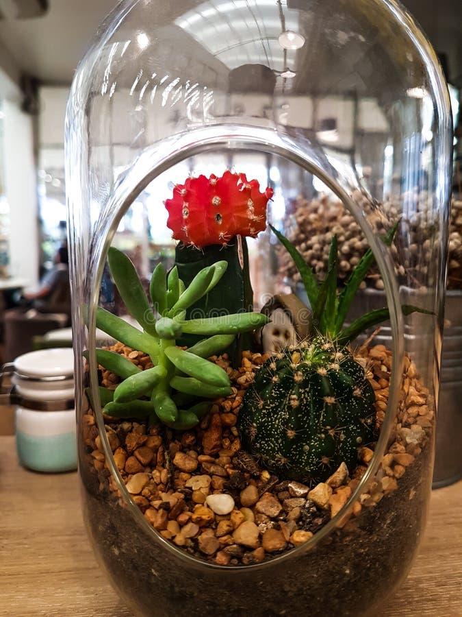 在瓶装饰的仙人掌在咖啡馆 库存照片