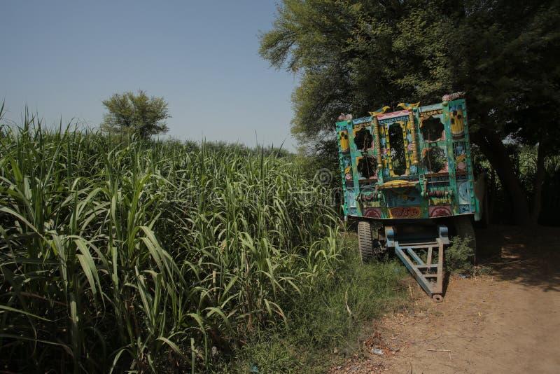 在甘蔗领域的拖拉机 免版税库存图片