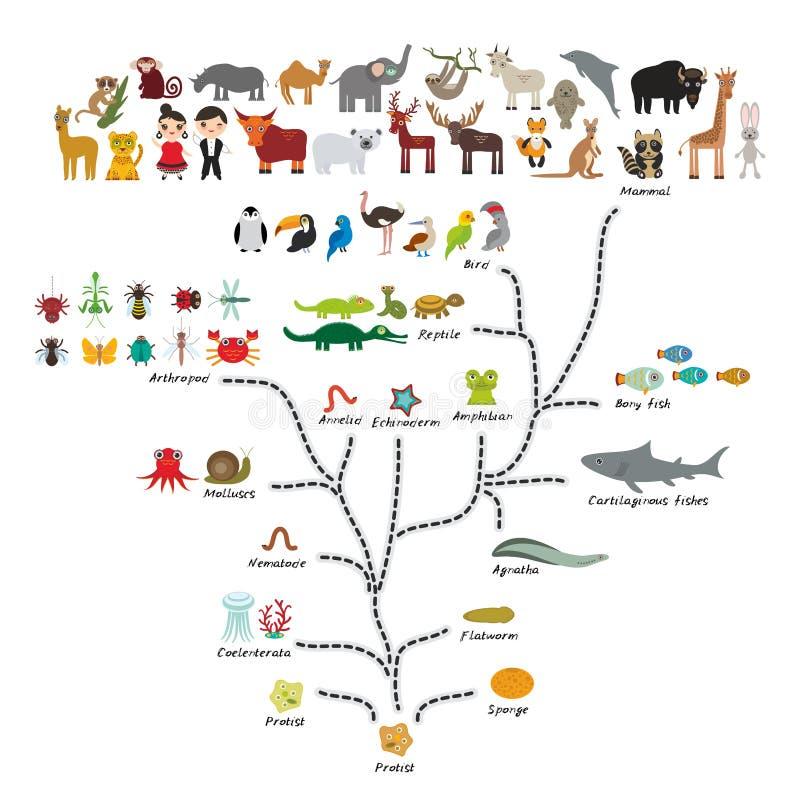 在生物的演变,在白色背景隔绝的动物计划演变  孩子\'s教育,科学 演变标度 皇族释放例证