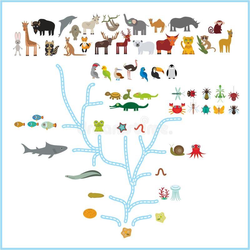 在生物的演变,在白色背景隔绝的动物计划演变  孩子\'s教育,科学 演变标度 库存例证