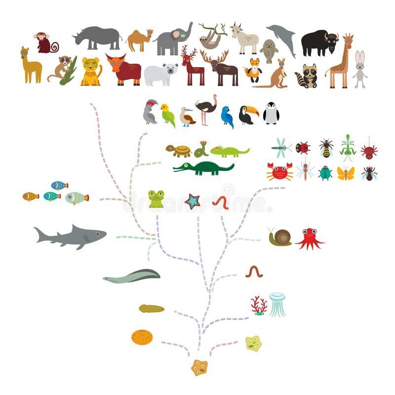 在生物的演变,在白色背景隔绝的动物计划演变  孩子\'s教育,科学 演变标度 向量例证