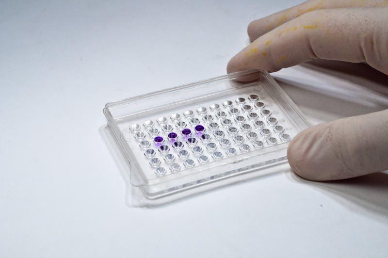 在生物研究实验室 库存照片
