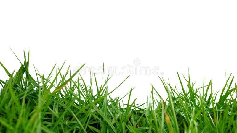 在生长在领域的选择聚焦绿草 免版税库存图片
