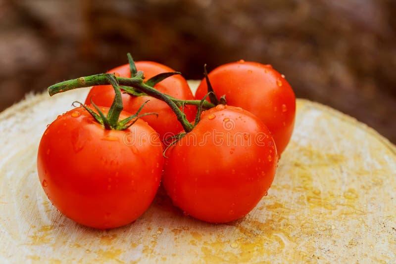 在生长的蕃茄的露滴在庭院 免版税图库摄影