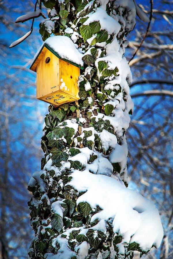 在用常春藤和雪盖的树的鸟箱子在蓝天背景 免版税库存照片