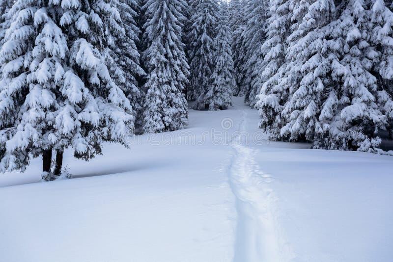 在用白色雪盖的草坪有导致密集的森林的一条被践踏的道路 图库摄影