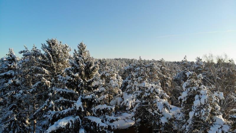 在用雪盖的林木的清楚的冷淡的天 鸟` s眼睛视图 俄罗斯圣彼德堡地区 免版税库存照片