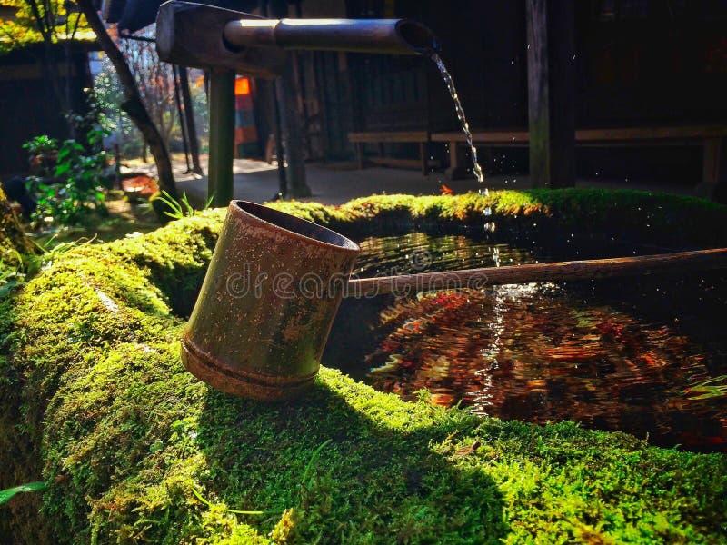 在用青苔盖的一个老池塘的竹浸染工 免版税库存图片