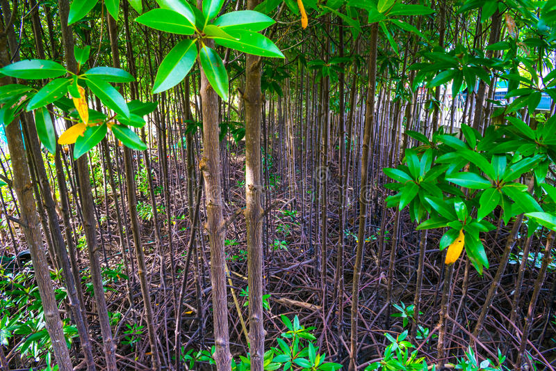 在田园诗森林沼地绿色森林地自然的光彩的日出 库存图片