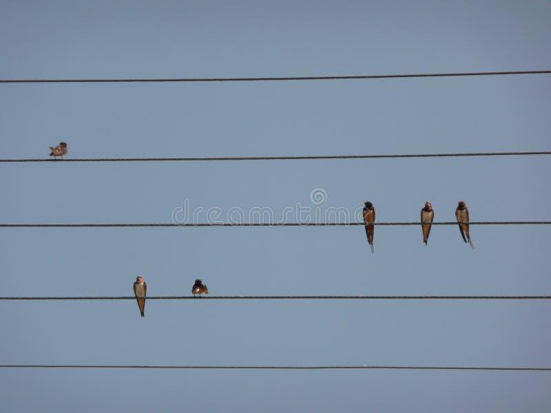 在电子连接缆绳放置的燕子 免版税库存图片