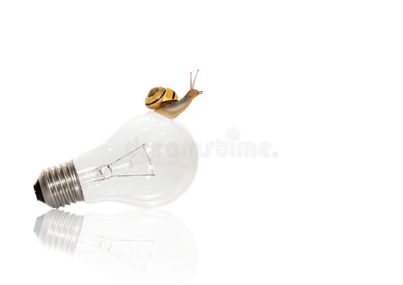 在电灯泡的蜗牛-成长 免版税库存照片