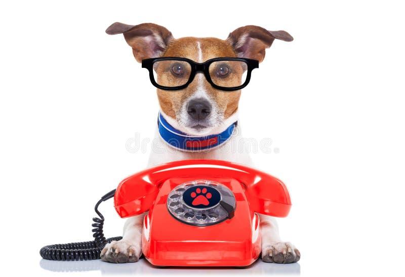 在电话的狗 免版税库存图片