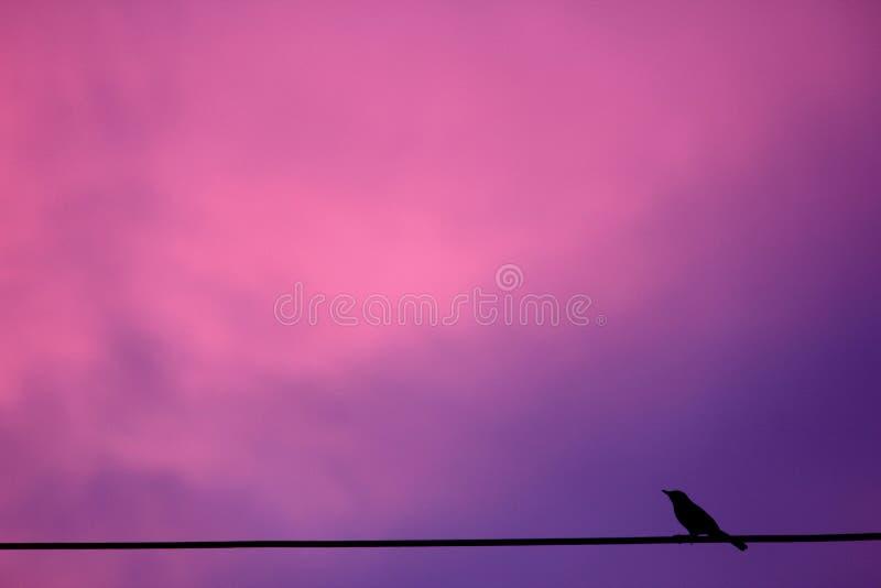 在电话线的一只鸟反对桃红色日落 免版税库存图片